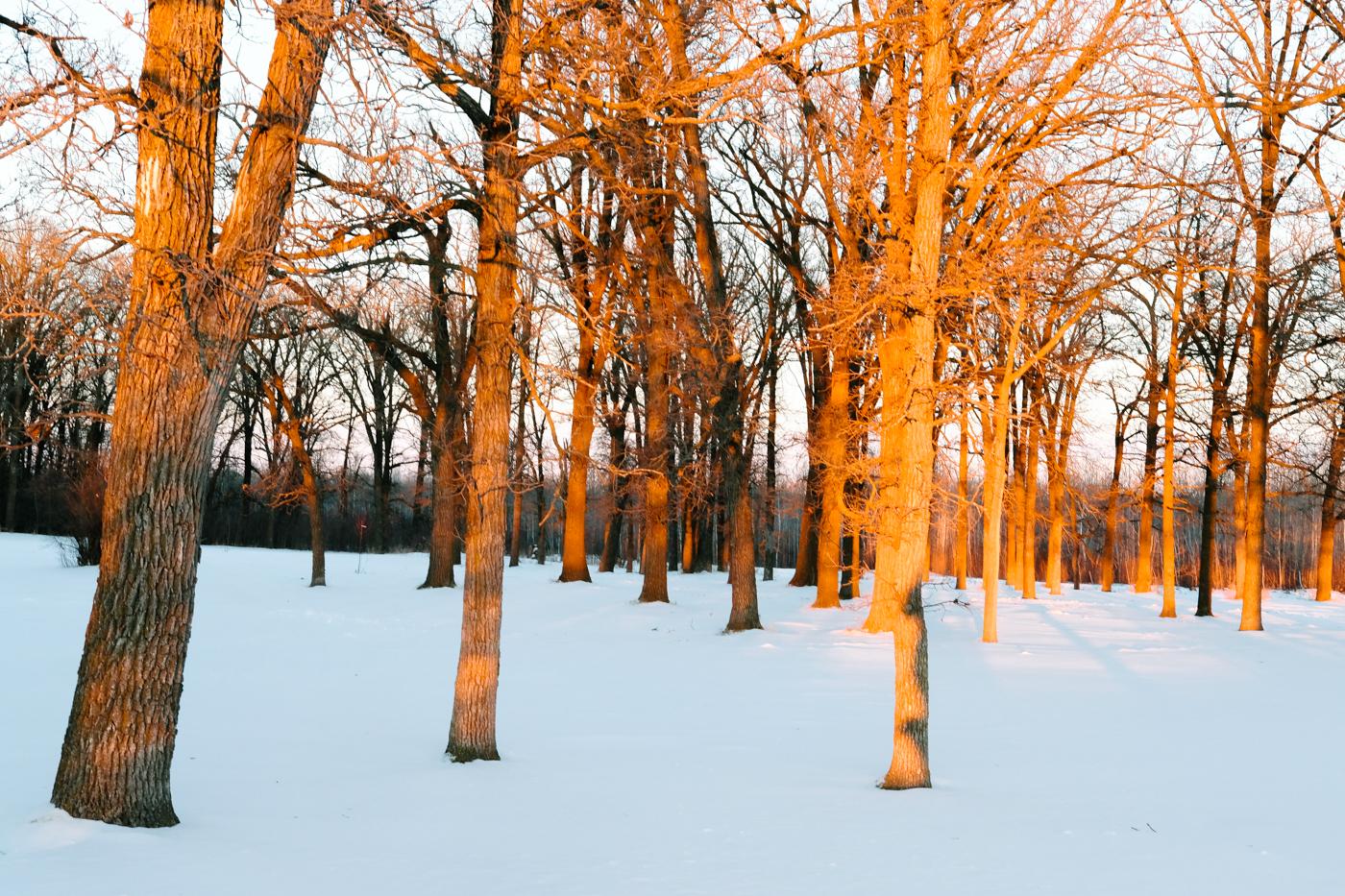 Debora Dahl winter sunset in the trees